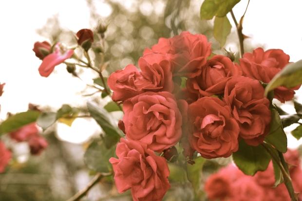 photography heelsandpeplum flowers