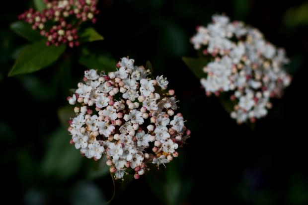 photography heelsandpeplum flowers contrast