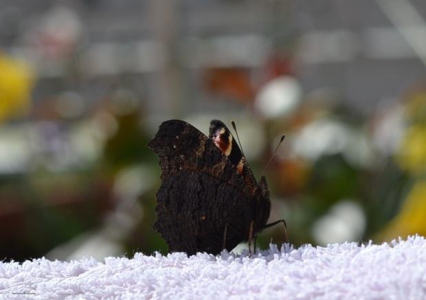 heelsandpeplum photography butterfly nature blog lifestyle