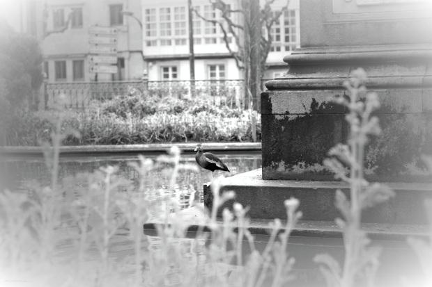 heelsandpeplum photography black and white