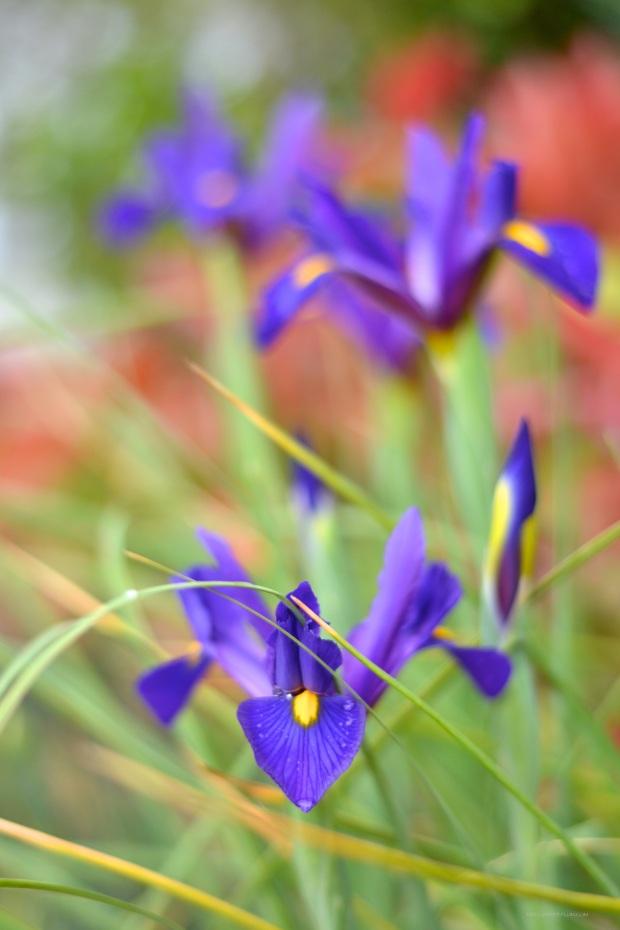 heelsandpeplum photography nature spring inspiration